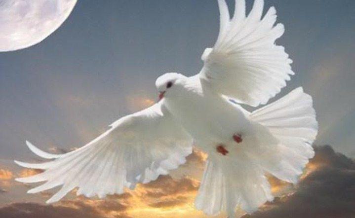 White Dove Flights   Morningside Inn