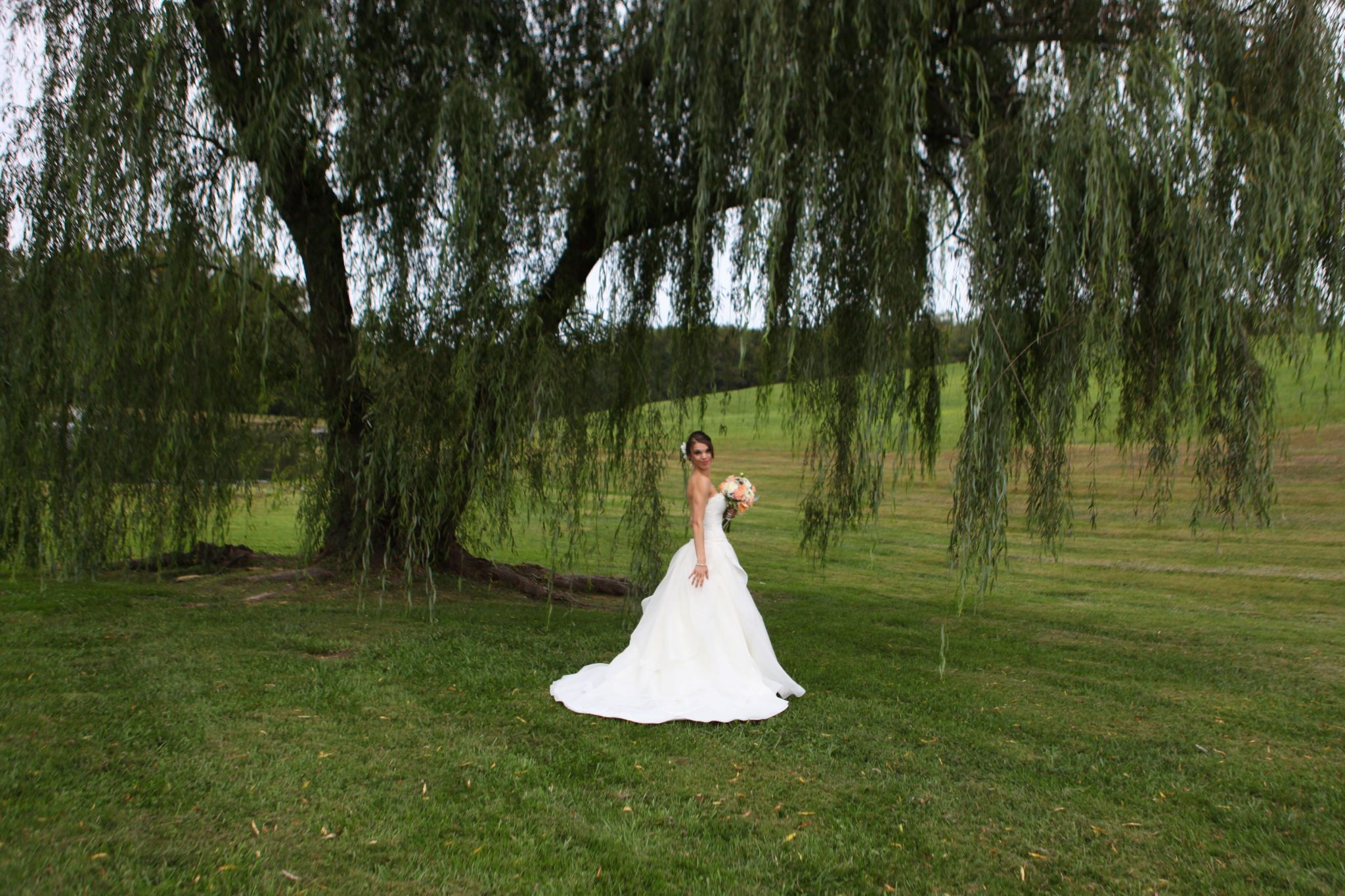 Bride under the willow tree